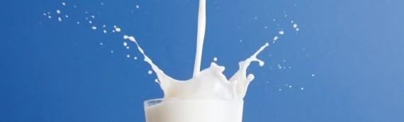 Le lait d'ânesse : un lait riche en enzymes à action immunoprotectrice