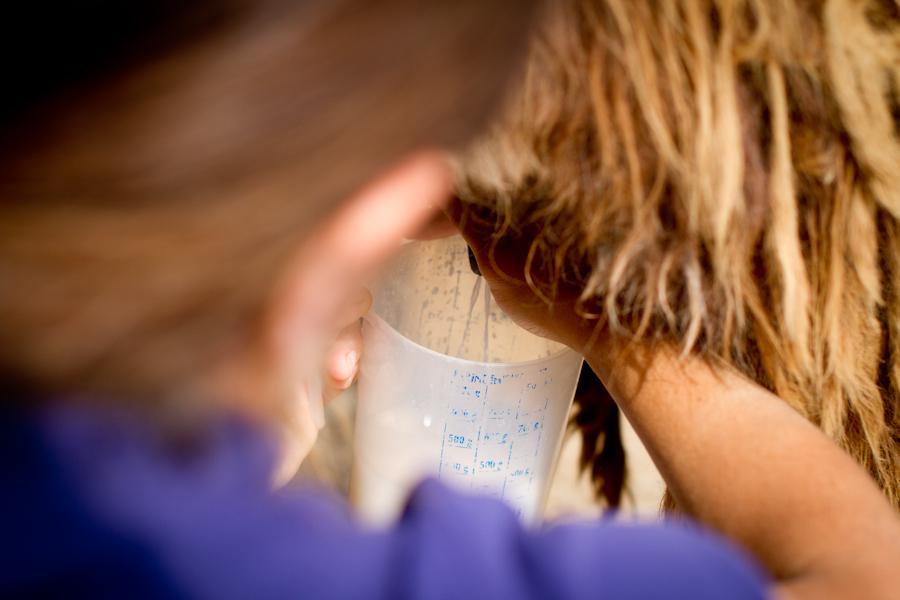 production du lait d'ânesse