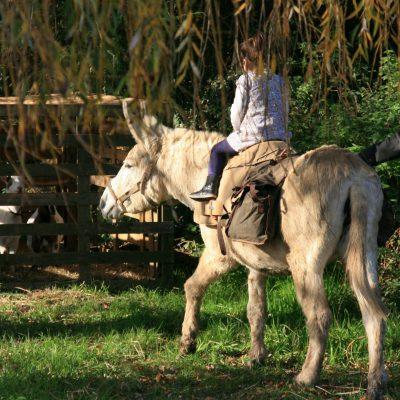 rando'âne